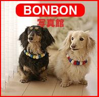 BONBON写真館